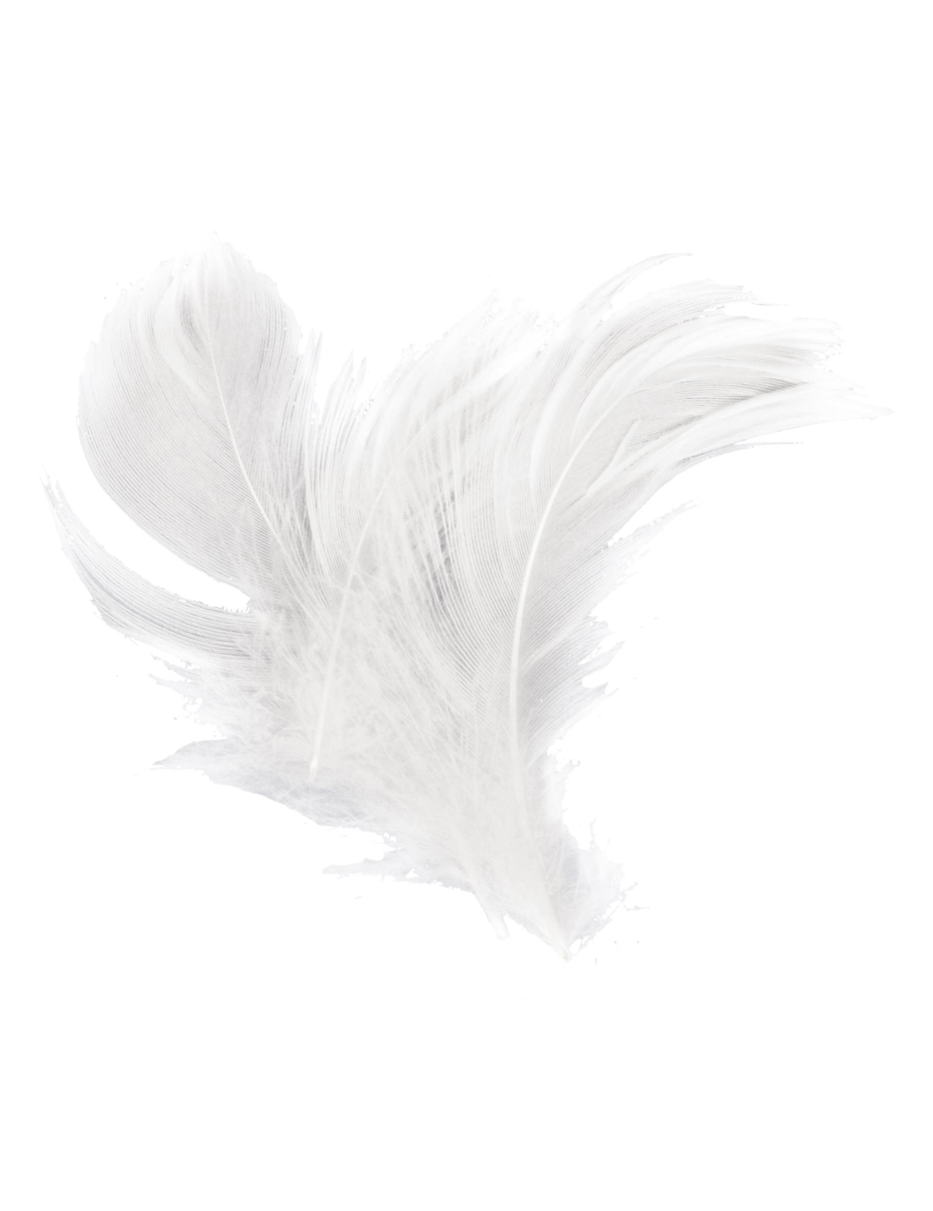 köpa vita fjädrar