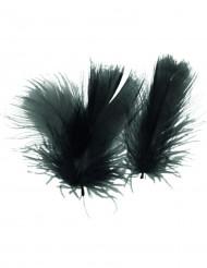 Svarta fjädrar