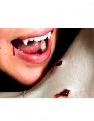 Sår av dubbelt vampyrbett anbringas med vatten - Premium