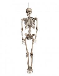 Hängande skelett till Halloweenfesten 160cm