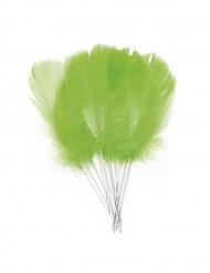 12 klargröna fjädrar