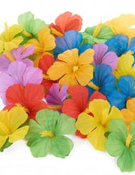 24 hibiskusblommor till sommarfesten