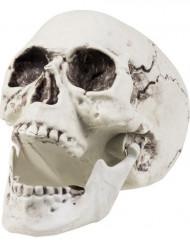 Kranium - Halloweendekoration