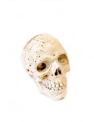 Dödskalle för bordsplacering i konstharts - Halloweendekor
