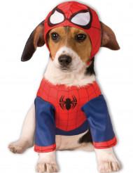 Hunddräkt Spider-Man™