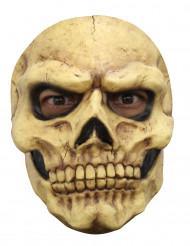 Skelettmask, vuxen