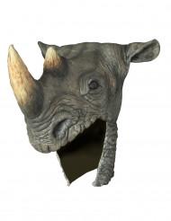 Hjälm noshörning vuxen