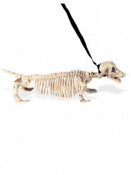 Hundskelett i koppel 55 cm