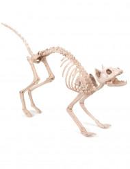 Läskigt kattskelett - Halloweenpynt
