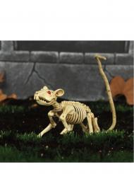 Råttskelett - Halloweendekoration