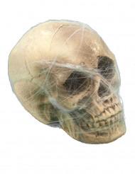 Kranium med spindelnät - Halloweendekoration