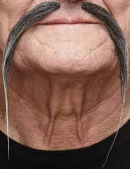 Grå kinesisk mustasch