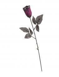 Svart ros med hint av lila och giltter