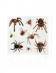 Tillfälliga spindeltatueringar