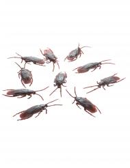 10 kackerlackor 7 cm