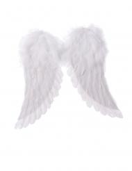Vita änglavingar 42x46 cm
