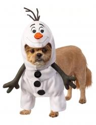 Frost Olof™ hunddräkt