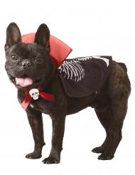Vampyrdräkt hund