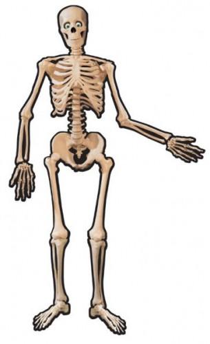 Skelett i kartong 1,4 m till Halloween