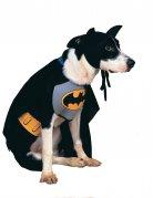 Batmandräkt för hundar till maskeraden
