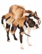 Spindeldräkt för hundar till Halloween